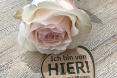 Rosen aus der Region